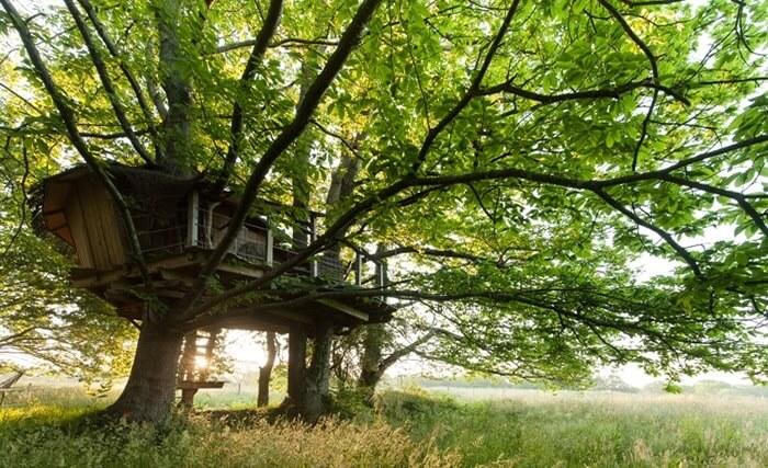 Cabane perchée dans des châtaigniers centenaires en Bretagne à Dihan