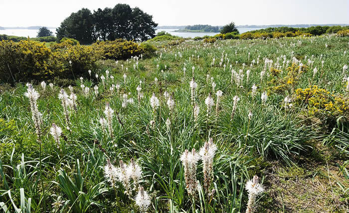 Une faune et une flore à découvrir sur le tour du Golfe du Morbihan