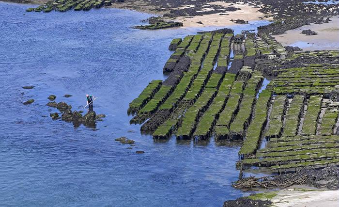 Parcs ostréicoles en Morbihan sud