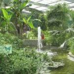 Jardins-exotique-du-morbihan